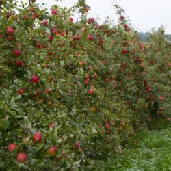King Orchards Fall Fun