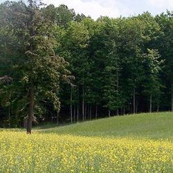 Drettmann Ranch